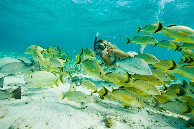 Santa Maria and Chileno Bay Snorkel Adventure Los Cabos