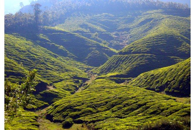 Munnar Lakshmi Hills Trekking