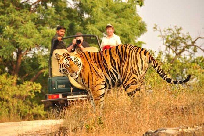 2-Days Private Ranthambhore Tiger Tour from Jaipur