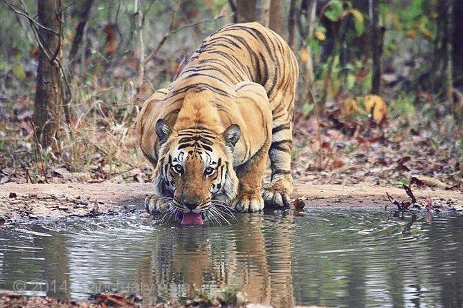 Ranthambhore Tiger Tour of Delhi, Agra, and Jaipur 5 Star Hotel