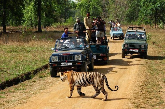 Private 3-Day Ranthambhore Tiger Tour including Agra and Jaipur