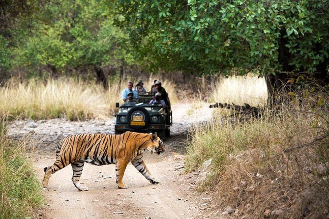 4 Days Jaipur, Ranthambore, Agra Tour With Safari, Hotels & Entry (Optional)