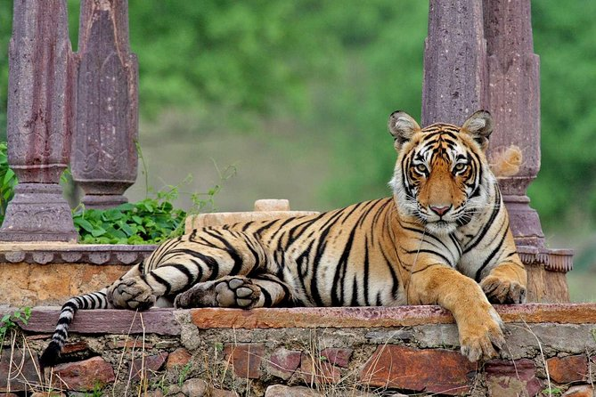 Private Wildlife Safari Tour in Ranthambore from Jaipur