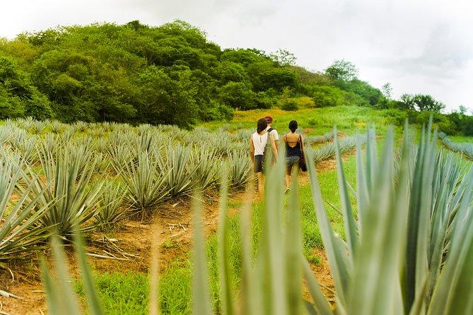 Hiking Adventure at Vinata Los Osuna