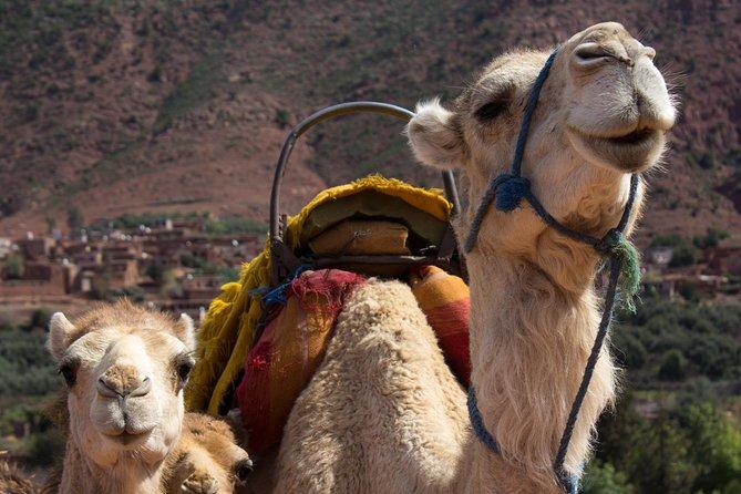Privé Kameelrit in het Hoge Atlasgebergte vanuit Marrakech