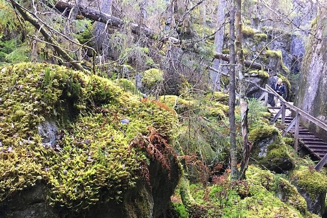 Orinoro Gorge and Finnish Wilderness Guided Tour with Sausages over Campfire