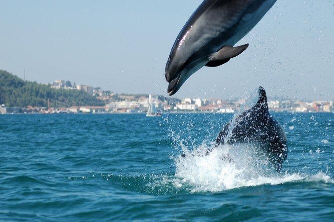 Arrábida Dolphins og Jeep Safari