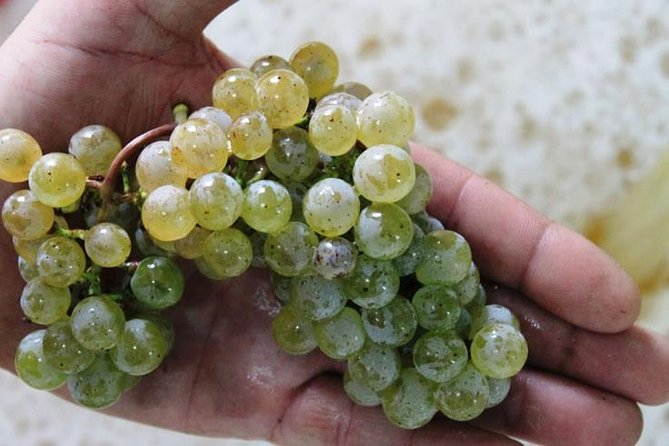 Excursión de un día en grupo pequeño a la región vinícola de Alvarinho Vinho Verde desde Porto