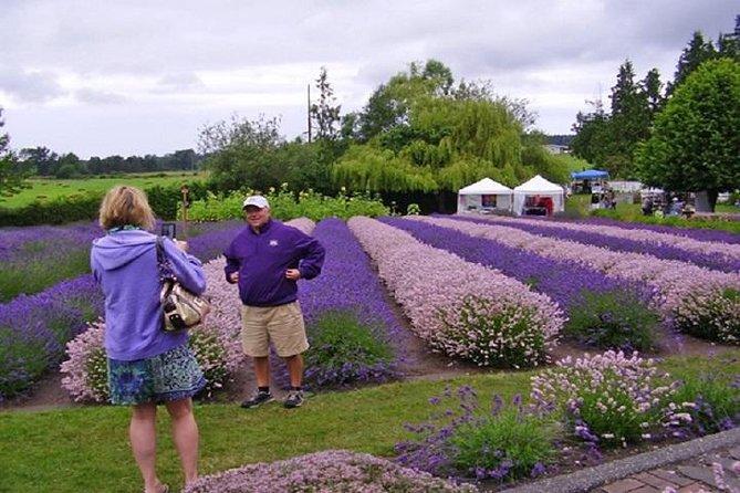 Sequim Lavender Festival Tour from Seattle