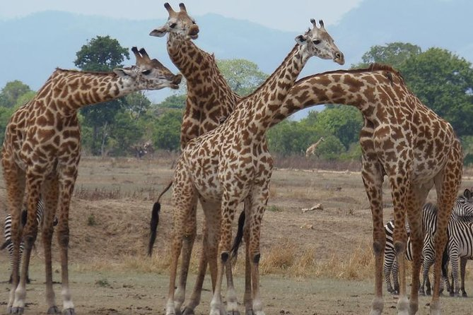 3 Days - Exploring Selous Game Reserve