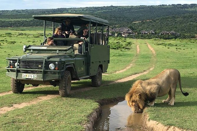 Day Safari at Pumba Private Game Reserve