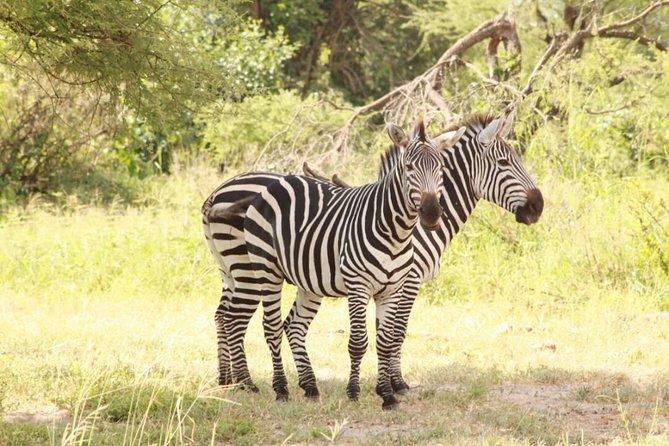 3-Day Taste of Tanzania mid-Range (Tarangire Ngorongoro)