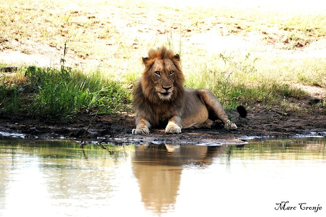 2 nätter Lion King Safari till Kruger från Nelspruit