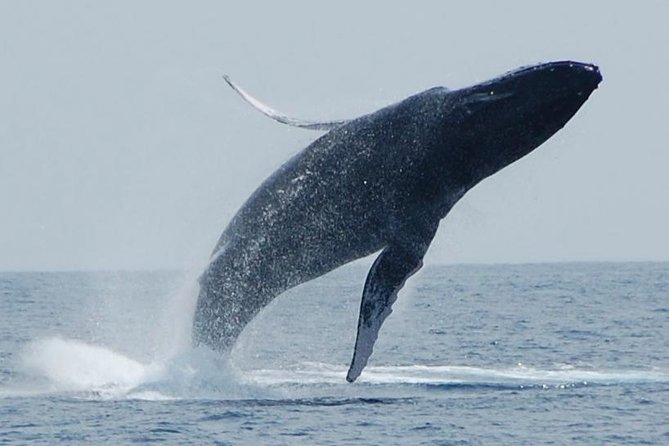 Observation des baleines sur la Big Island