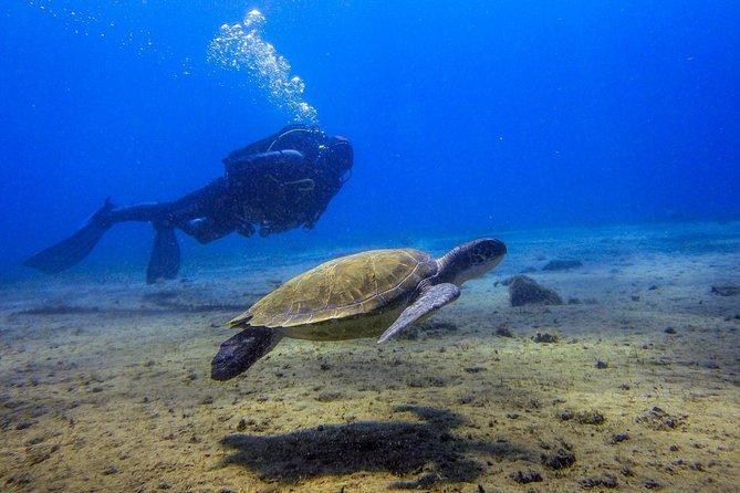 Padi Scuba Diver Course In Médano