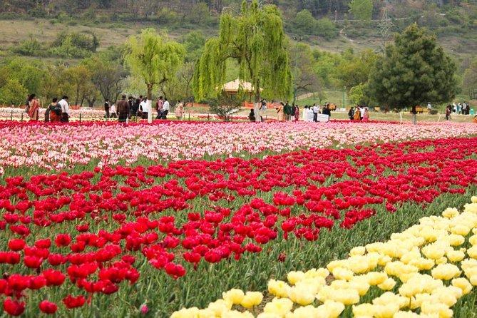 5-Days Private Kashmir Honeymoon Tour from Srinagar