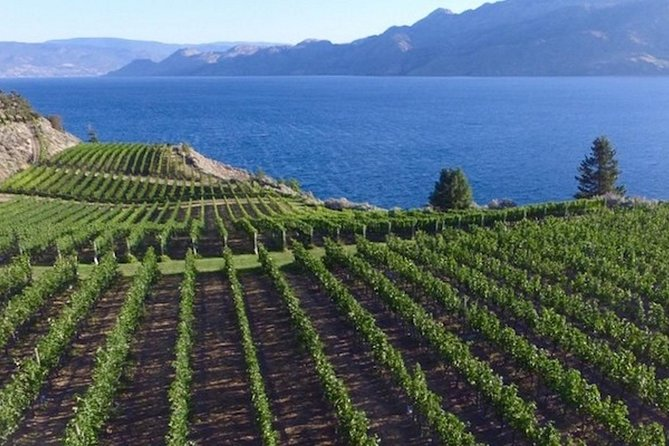Painting Class Experience at Okanagan Vineyard with Optional Lunch and Winery Tour