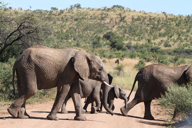One day Safari to Pilanesberg including a 5 Hour Open Safari Vehicle Drive