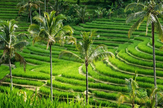 Private tour- UNESCO rice terraces, Ulundanu Beratan, Batukaru, Tanah lot temple