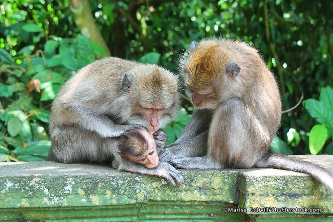 Amazing Private Tours-Bedugul-Lunch-Kedaton Monkey Forest-Tanah Lot Temple