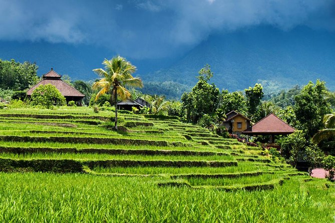Private Full Day Trip Enjoy-Bedugul-Lunch-Jatiluwih Rice Terrace-Batukaru Temple