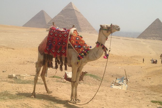 Cairo Giza and Luxor in Two Days in including Domestic flight