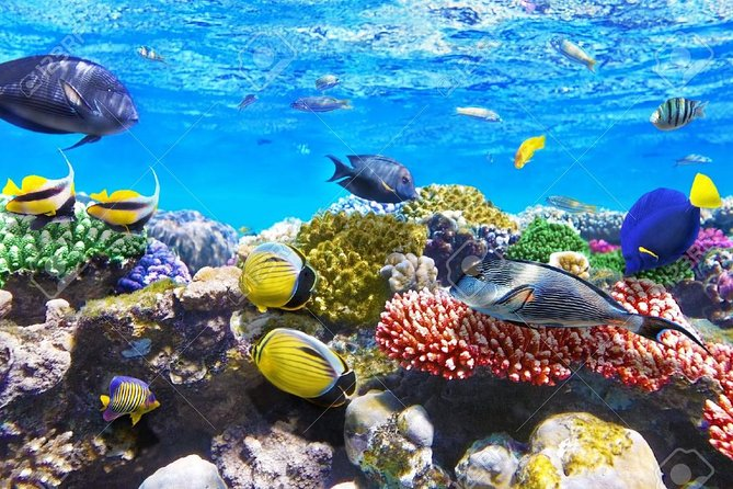Snorkeling and recreational trip toSharm El Naga Bay from Hurghada