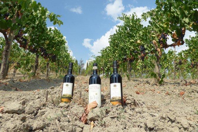 Maxi Wine Tour San Gimignano Wine Tasting - San Quirico Winery
