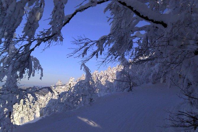 Private 3-Day Slovakia Winter Break from Bratislava