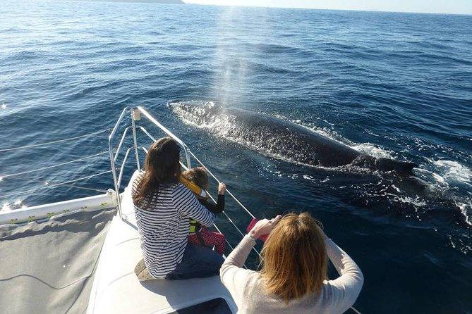 Intime Sydney Delfin- und Walbeobachtungstour ab Manly