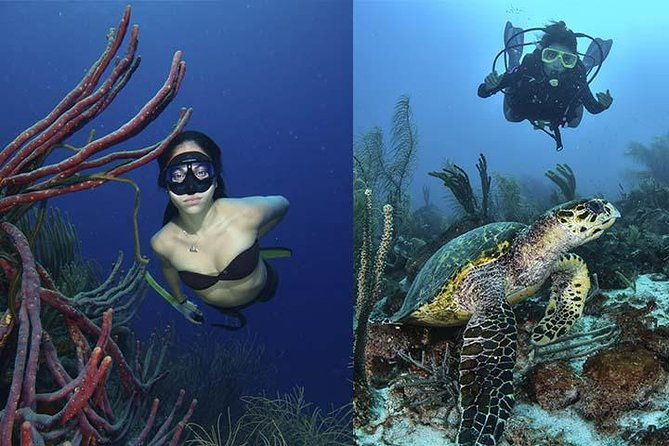 LOS ROQUES UNDERWATER PHOTOGRAPHY COURSES AND WORKSHOPS