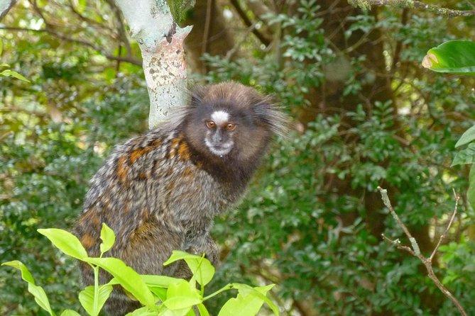 Tijuca National Park & Botanic Garden Guided Tour & Transfer