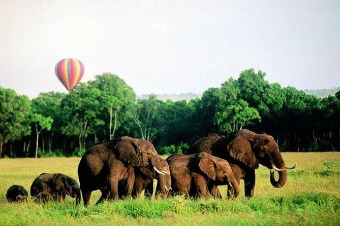 4 Days Enthralling Safaris in Kenya-lake Nakuru Masai Mara