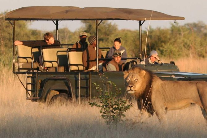 Game Drive in Open-side Jeep
