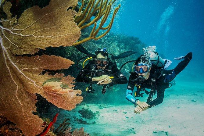 2 Tanks dive for certified divers in Playa del carmen reef