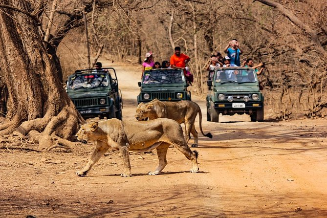 Jeep Safari - Gir National Park, Gujarat, India