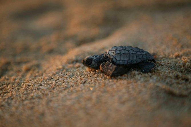 Los Cabos Turtle Release Eco-Experience