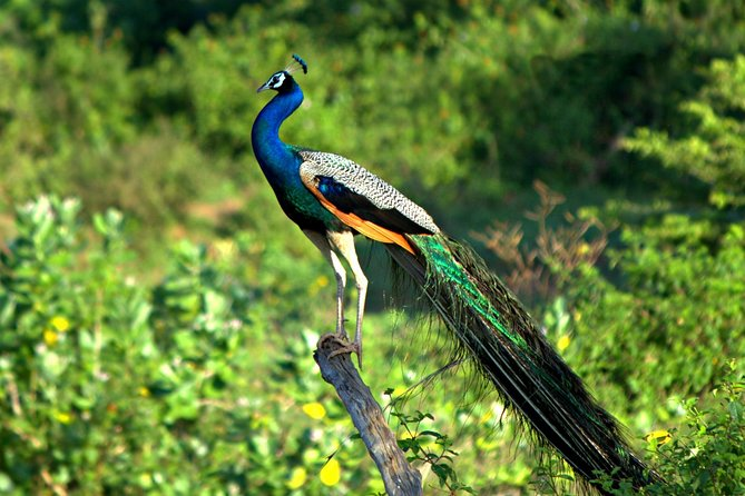 Golden Triangle with Birds Delhi Agra Bharatpur National Park Tours