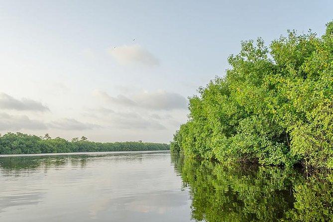 Private Tour from Riviera Maya to Nichupte Lagoon Wildlife