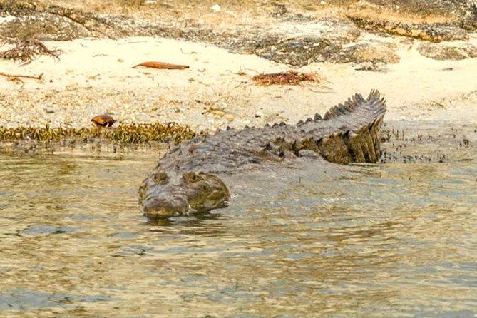 Private Crocodile Tour from Riviera Maya