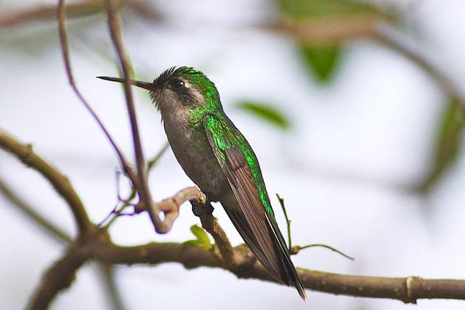 Private Tour: Bird Watching Cozumel Island