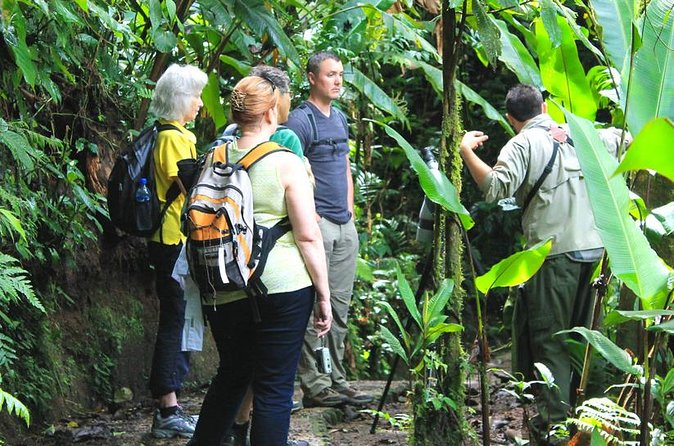 Full Day to Monteverde Cloud Forest from Guanacaste