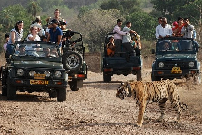 Same day private Ranthambore wildlife tour from Jaipur