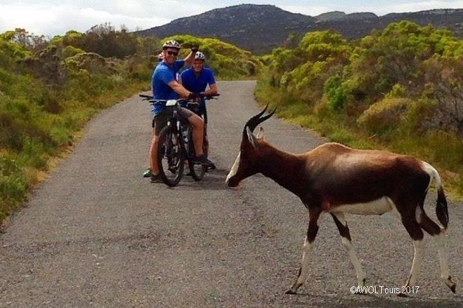 AWOL Cape Point Cycling Tour