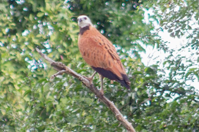 Birding by Boat Cruise at Crooked Tree Wildlife Sanctuary from Belize City