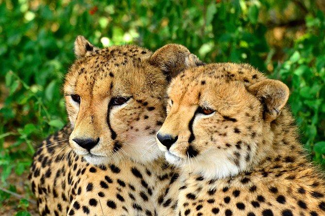 Excursión privada de un día a St Lucia Estuary Safari y Emdoneni Wild Cat Project desde Durban