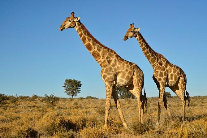 Safari privado de medio día desde Durban