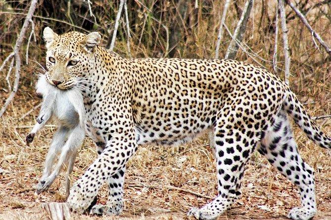 6-Day Wonderful Kruger National Park Safari from Johannesburg