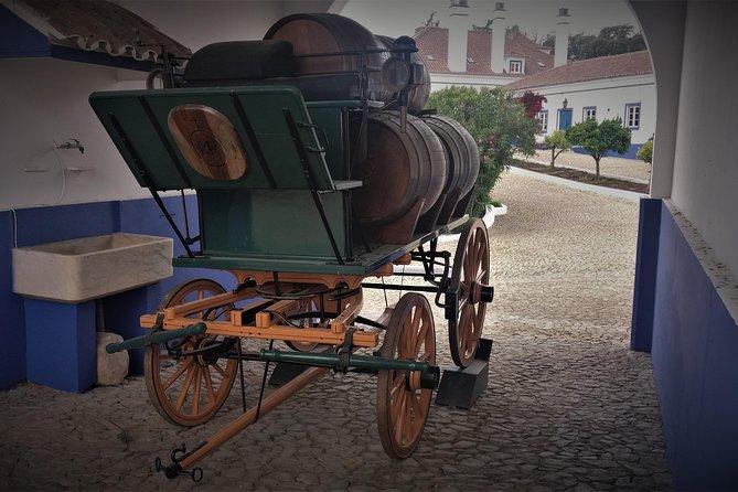 Tour de dia e vinho e cortiça ao Alentejo de Lisboa