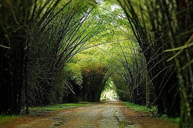 Lancetilla Botanical Garden from Tela